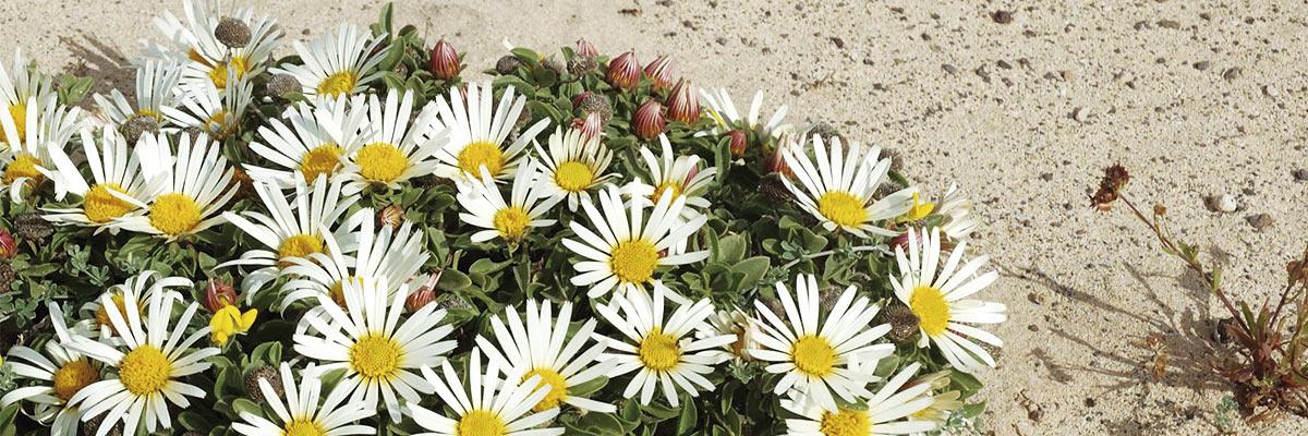 Floraendemica