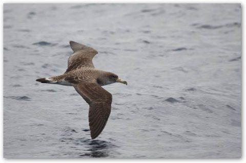 Medio Ambiente declara tres nuevas zonas de especial protección de aves en Lanzarote