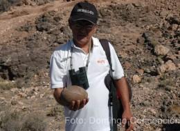 Huevo de avestruz fósil