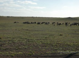 Llanos de Playa Quemada
