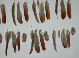 Plumas 23-33 03