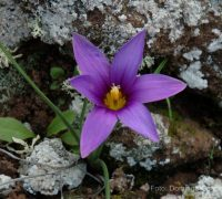 Flora de Lanzarote