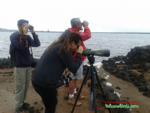 Avistamiento de Aves de playa: Salinas de Janubio.