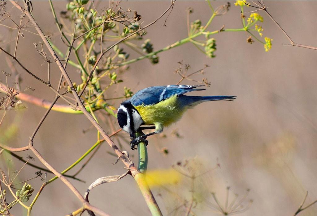 Sábado 26: Avistamiento de aves climácicas en Haría – Máguez